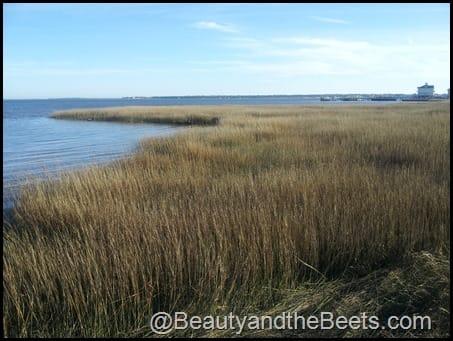 Charleston marsh land