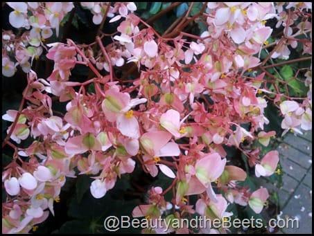 LEgoland Flowers