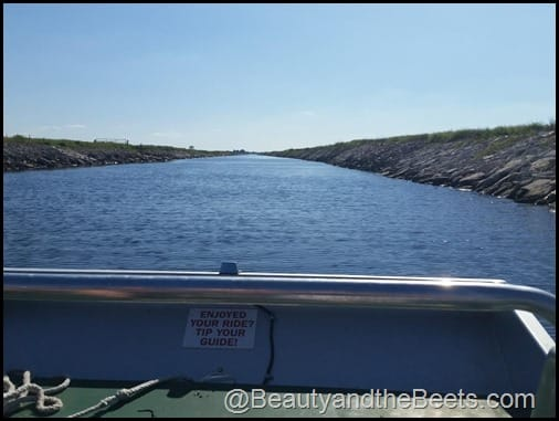 Orlando Airboat Tours Beauty and the Beets (9)