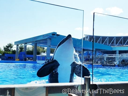 Sea World Orlando Dine with Shamu Beauty and the Beets