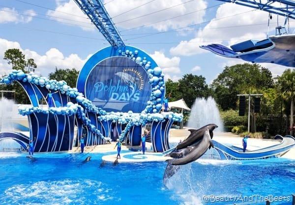 Dolphin Days Sea World Orlando Beauty and the Beets (6)