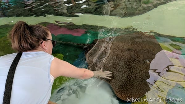 Stingray touch Sea World Orlando Beauty and the Beets