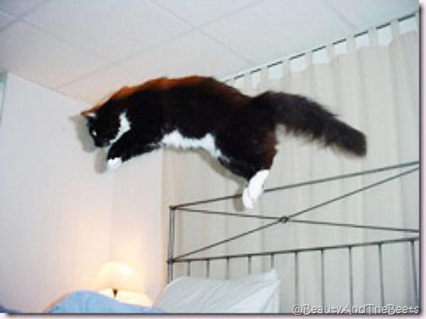 a tuxedo kitten jumping in the air across a wrouth iron bed