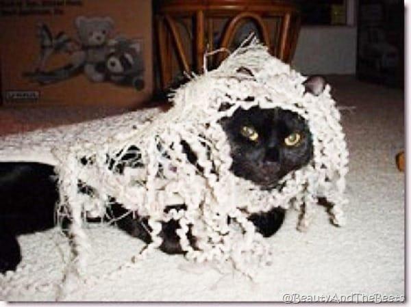 a black cat tangled up in a shredded rug, making him look like a rasta kitten