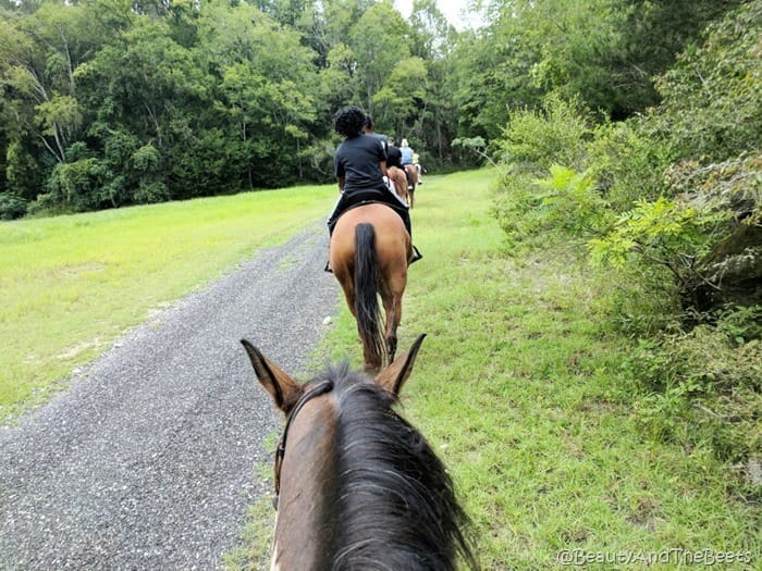 The Canyons Horseback Riding Ocala Beauty and the Beets (5)