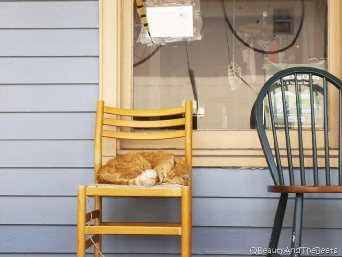 a cat sleeping on a porch on a chair against a blue house