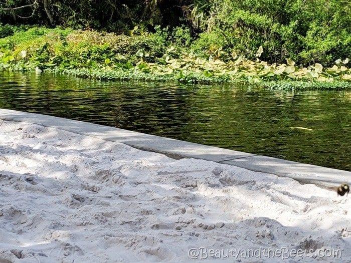 Wekiva Island Beauty and the Beets white sand