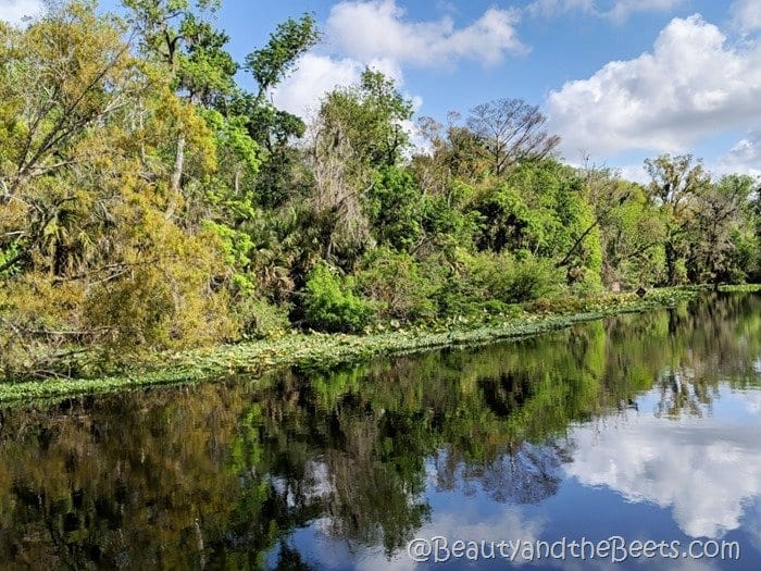 Wekiva River Wekiva Island Beauty and the Beets