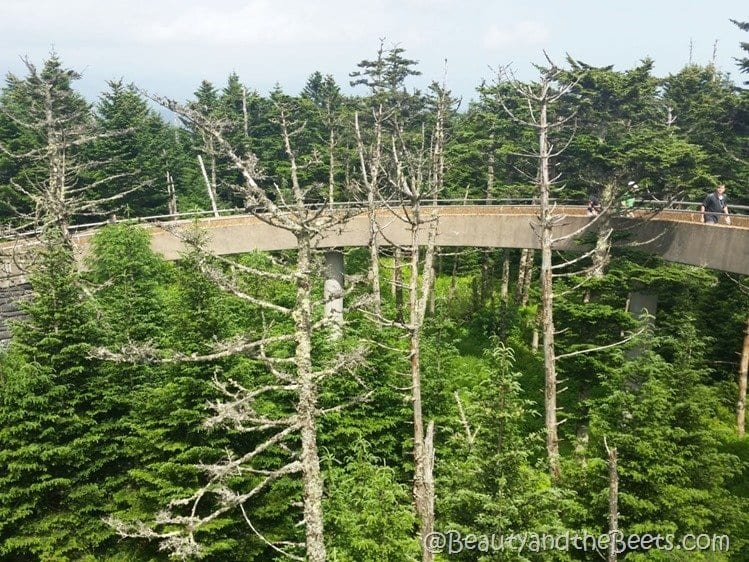 Clingmans Dome walkway Beauty and the Beets