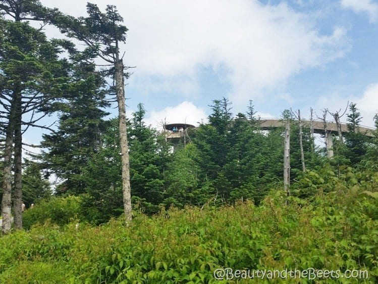 Smoky Mountains Clingmans Dome _ Beauty and the Beets