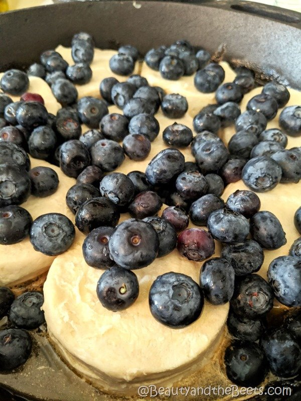 Blueberry biscuits Beauty and the Beets