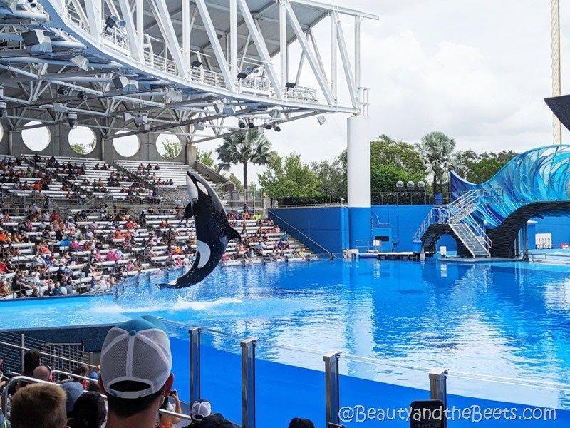 Orca Sea World Orlando Beauty and the Beets