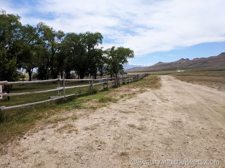 Antelope Island State Park ranch Beauty and the Beets
