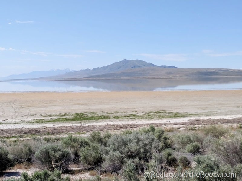 Antelope State Park Great Salt Lake Beauty and the beets