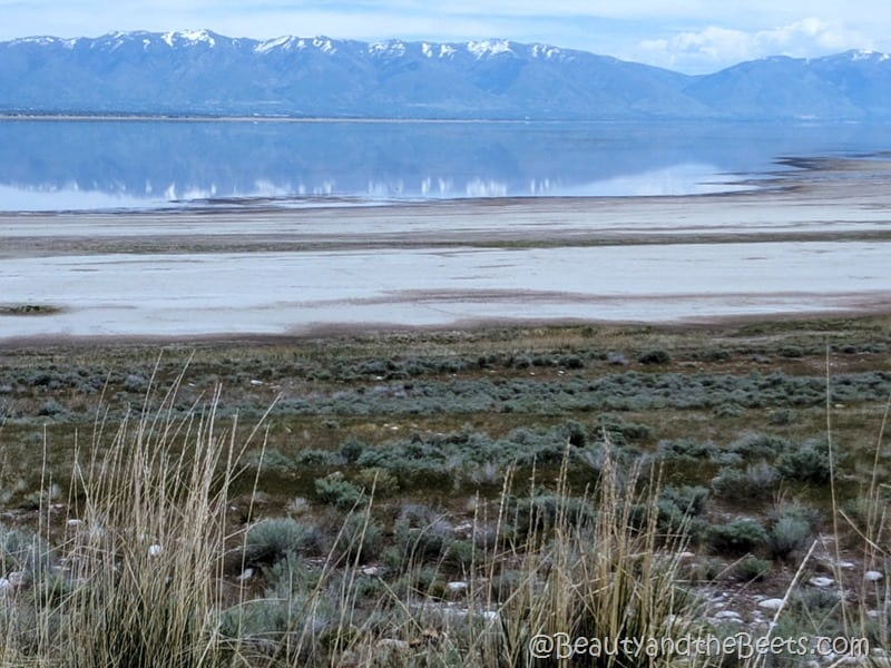 Great Salt LAke reflection Beauty and the Beets